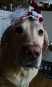 私の追っかけの相手、マフィちゃんです。クリスマスの飾りを頭につけられて、今ひとつ、不機嫌です。