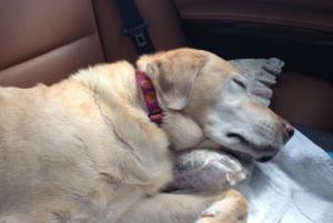 車の中で爆睡しています